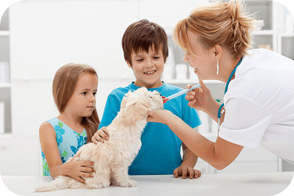 veterinarian medications